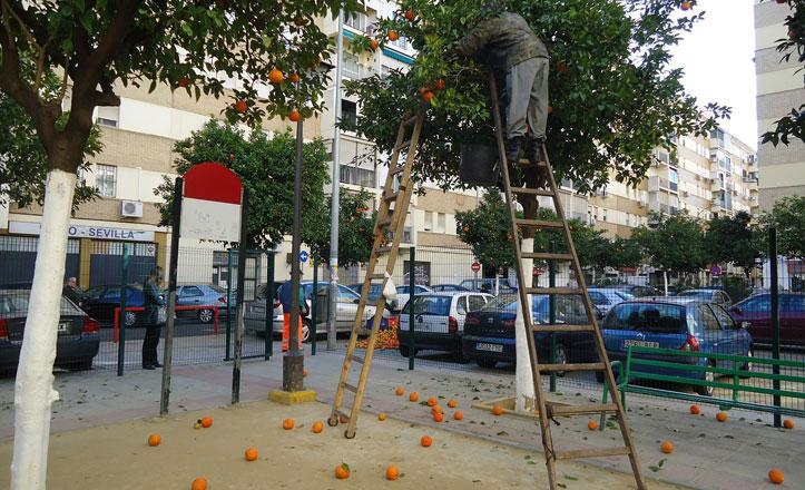 muere-un-trabajador-en-la-recogida-de-naranjas